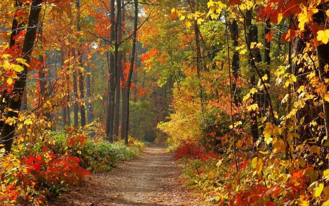 Créer sa santé avec l'énergie des saisons (automne)