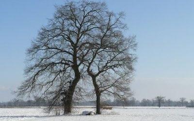 Le nouvel an des arbres