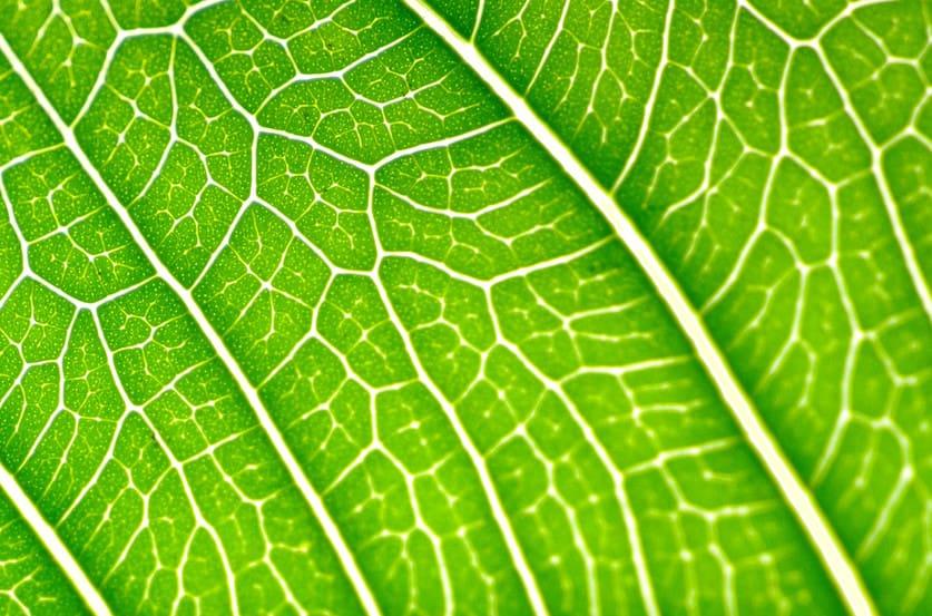 Avril égal Chlorophylle