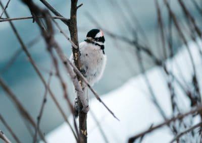 neige-oiseau