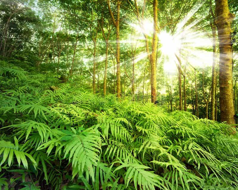Le soleil dans les branches