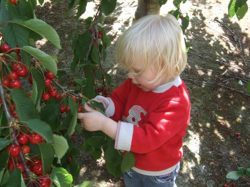 Un bébé qui mange des fraises