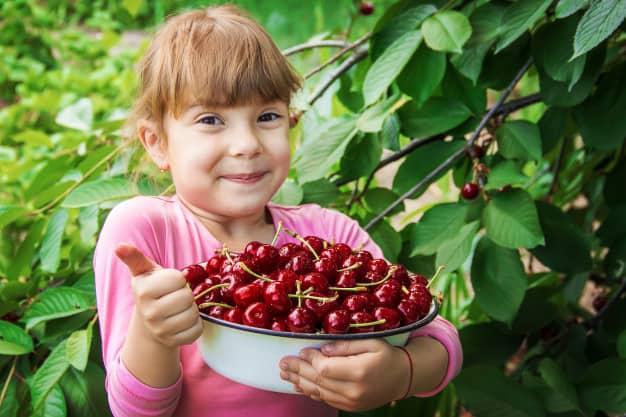 Une fillette avec un panier de cerises