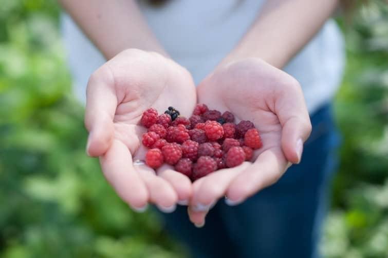 Fruits rouges en main