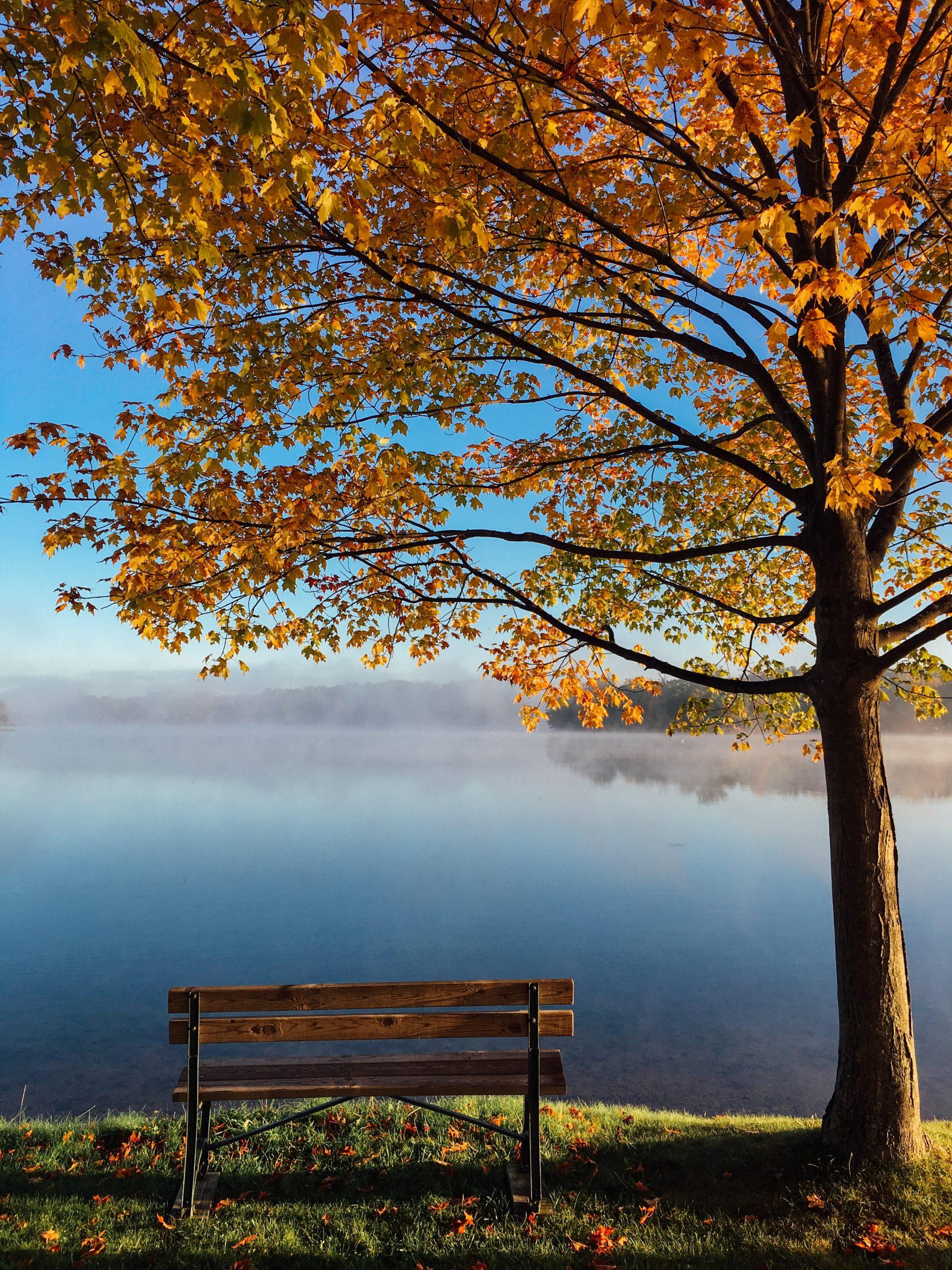 Un banc au bord de l'eau en automne