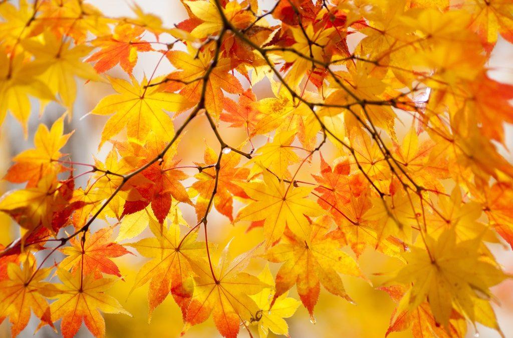 La lumière de l'automne